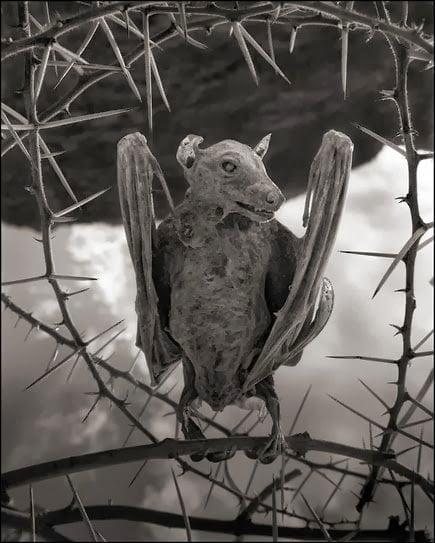 Natron lake calcified bat