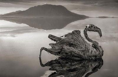 بحيرة ناترون الإفريقية الحمراء هل تحول الحيوانات إلي أحجار حقاً ؟! 5