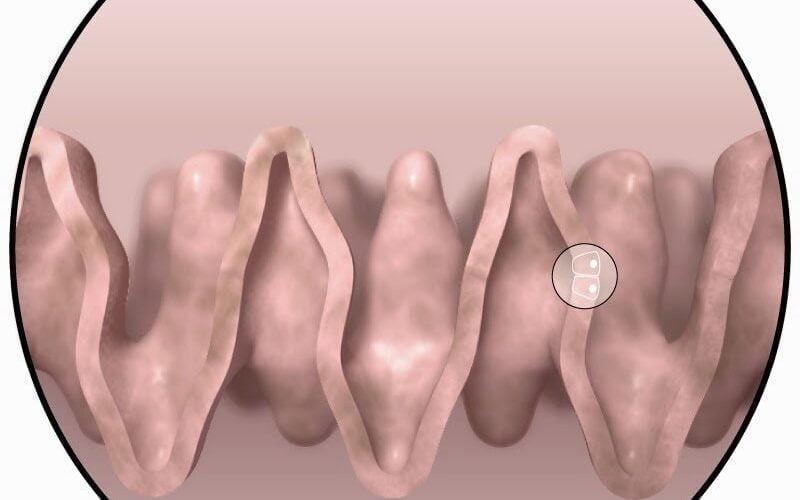 علاج جديد للتأثير القاتل للإشعاع على جسم الإنسان 16
