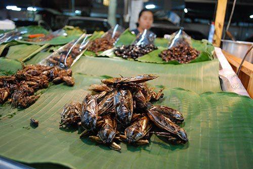 هل تصبح الحشرات غذاء الفقراء خلال الـ 50 عاماً القادمة ؟ 3