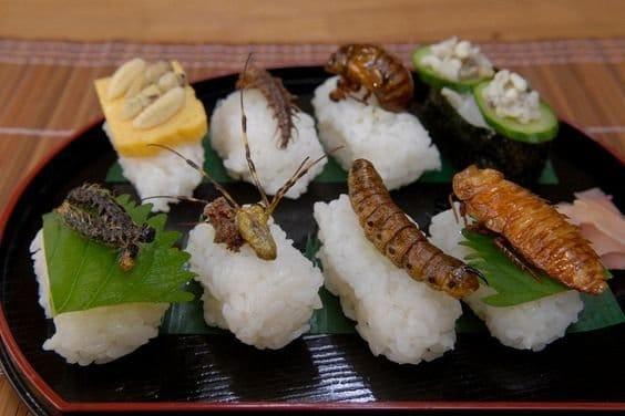 هل تصبح الحشرات غذاء الفقراء خلال الـ 50 عاماً القادمة ؟ 10