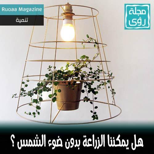 هل يمكن زراعة النباتات بدون ضوء الشمس تحت لمبات إضاءة عادية ؟ 11