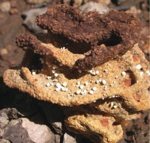 هل النمل الابيض أول مزارعي العالم؟ 4