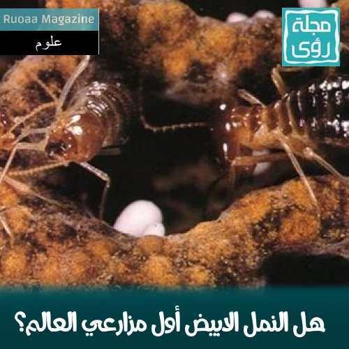 هل النمل الابيض أول مزارعي العالم؟ 1