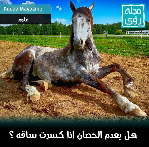 لماذا يقتل الحصان و لا يعالج إذا كسرت ساقه ؟